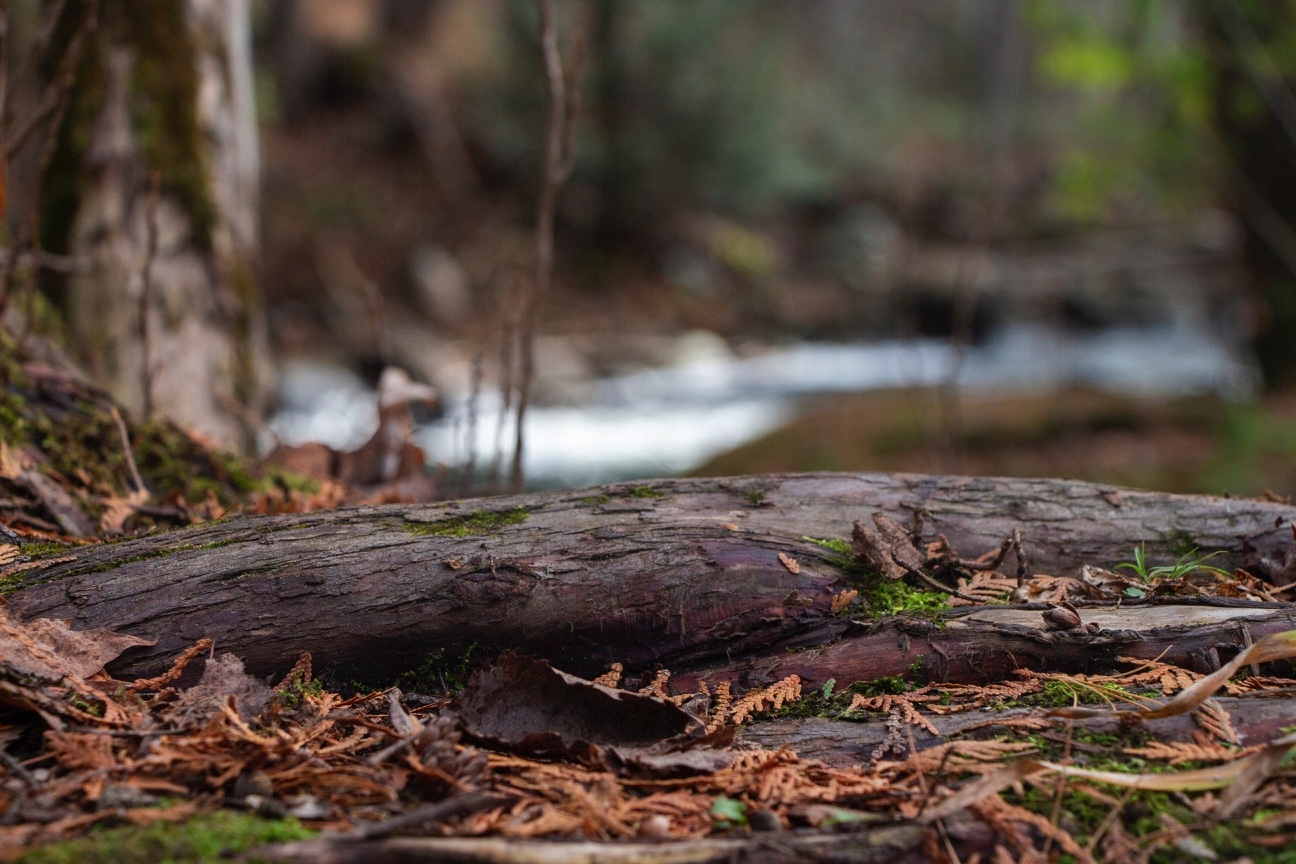No. 74 - Fallen Log in Forest Floor by Perfectus Photography Design Co